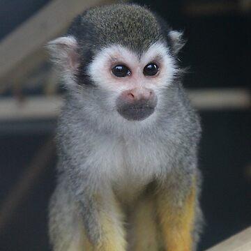 Monkey by durzarina