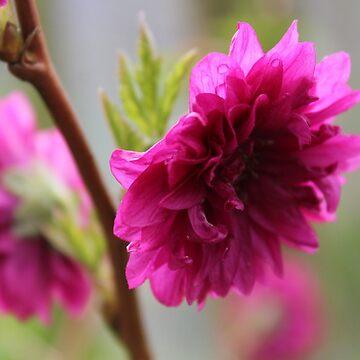 Flower by durzarina
