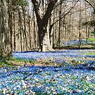 Carpet of Blue by Shulie1
