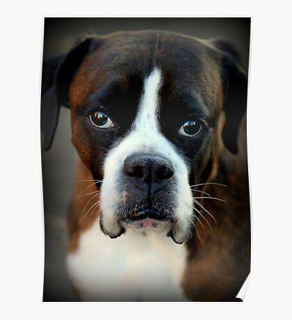 Erinnerung an Arwen - Boxer Dogs Series Poster