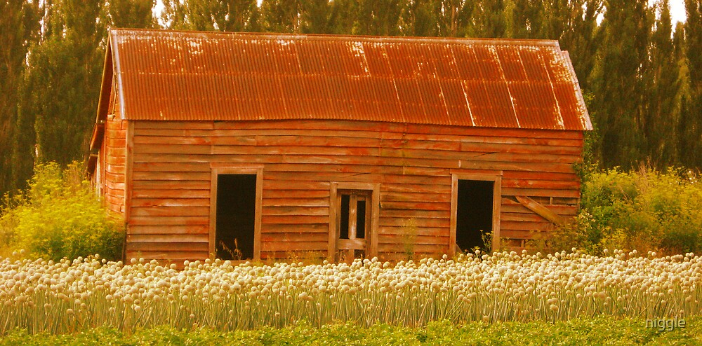 The Onion Shed by niggle