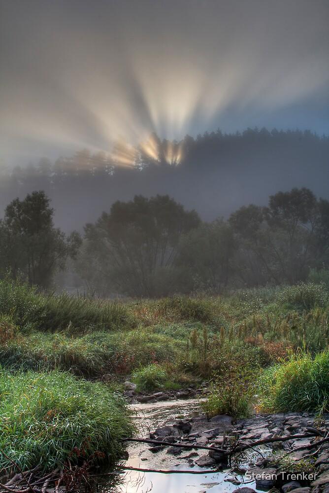Misty Morning by Stefan Trenker