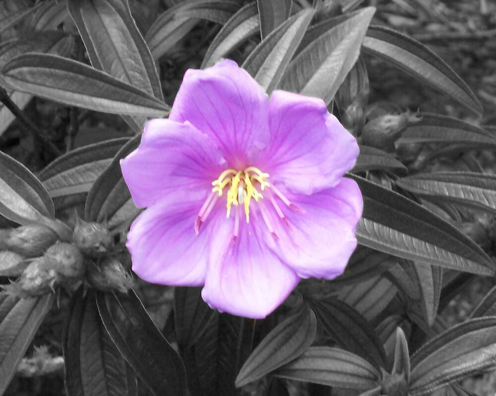 Purple flower by footyman
