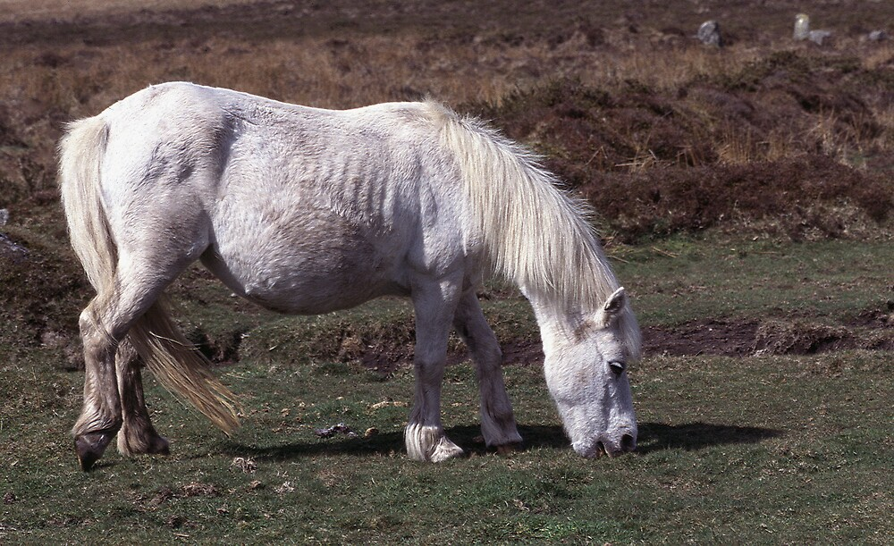 Dartmoor Pony by kitlew