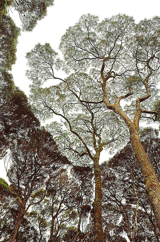 Rainforest Dreaming - Tasmania, Australia by Philip Johnson