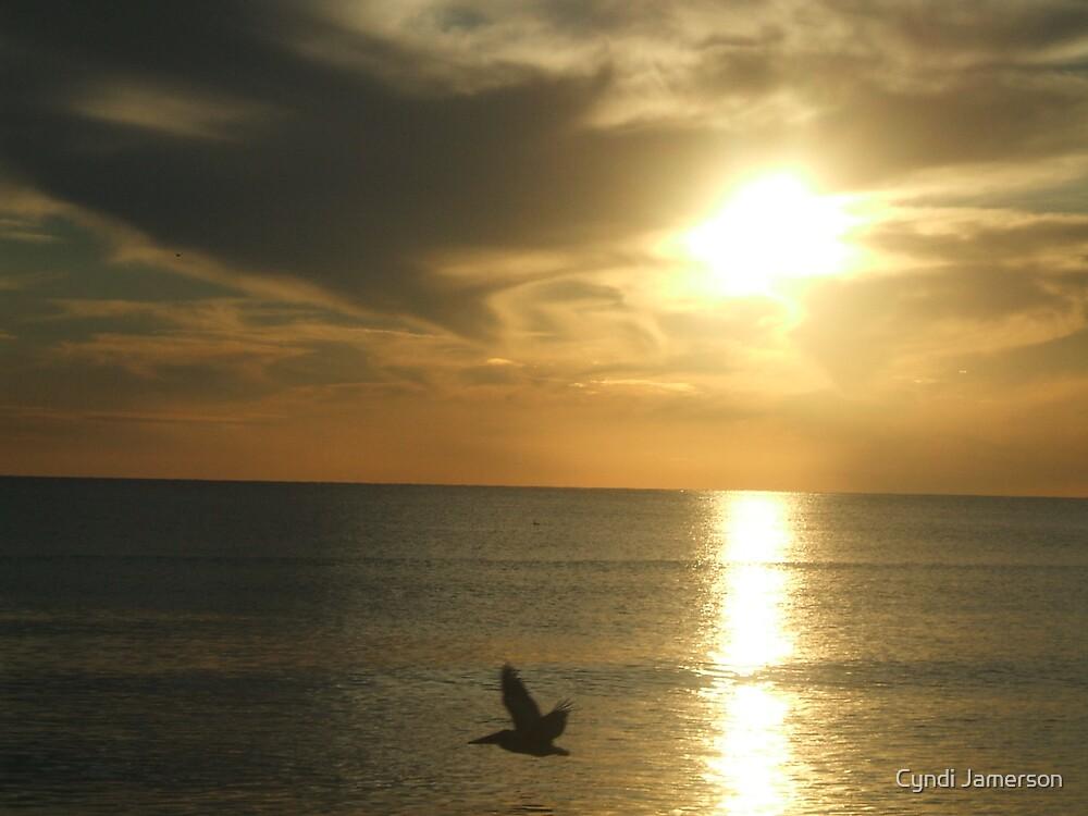 LONE PELICAN by Cyndi Jamerson