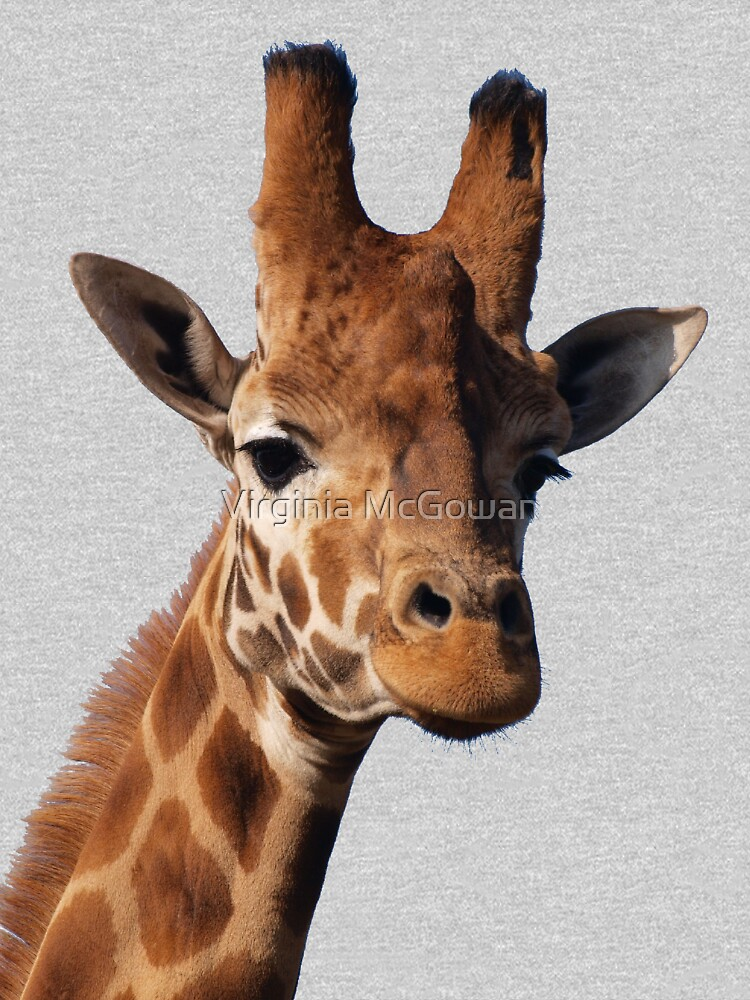 Giraffe by ginnymac