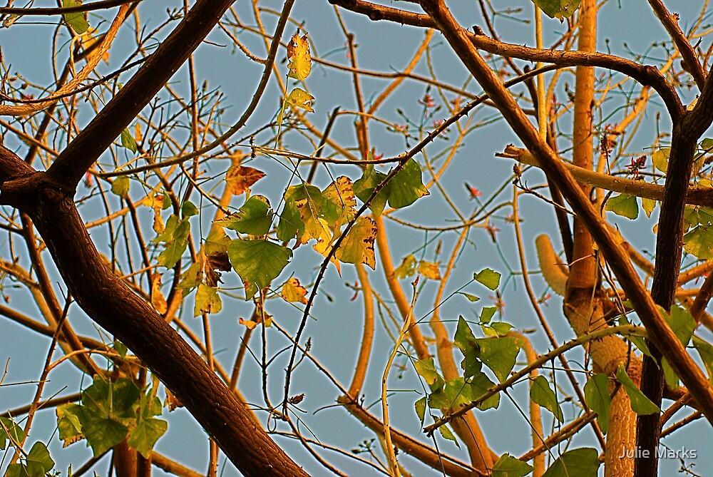 Ornamental Leaves by Julie Marks