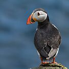 Puffin by M S Photography/Art