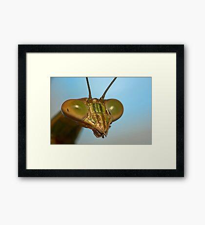 Mantis Face Framed Print