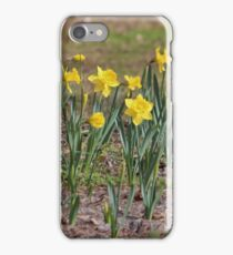 Daffodils Say Spring iPhone Case/Skin