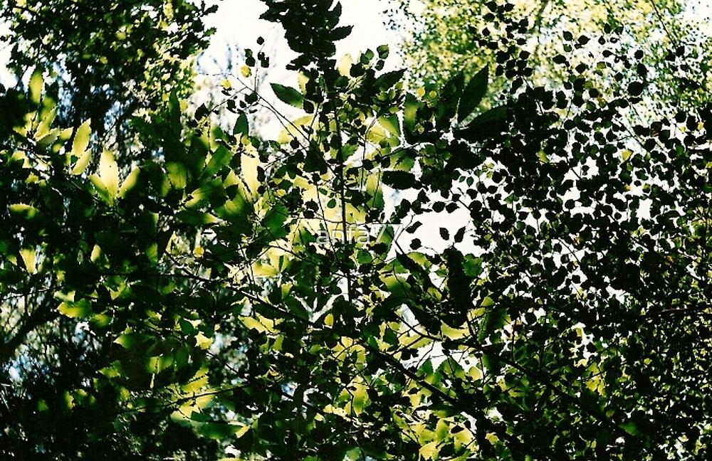 leafy sky by anfa77