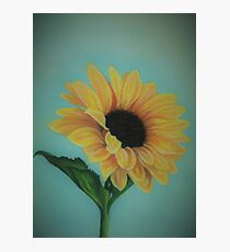 A Single Sunflower Photographic Print