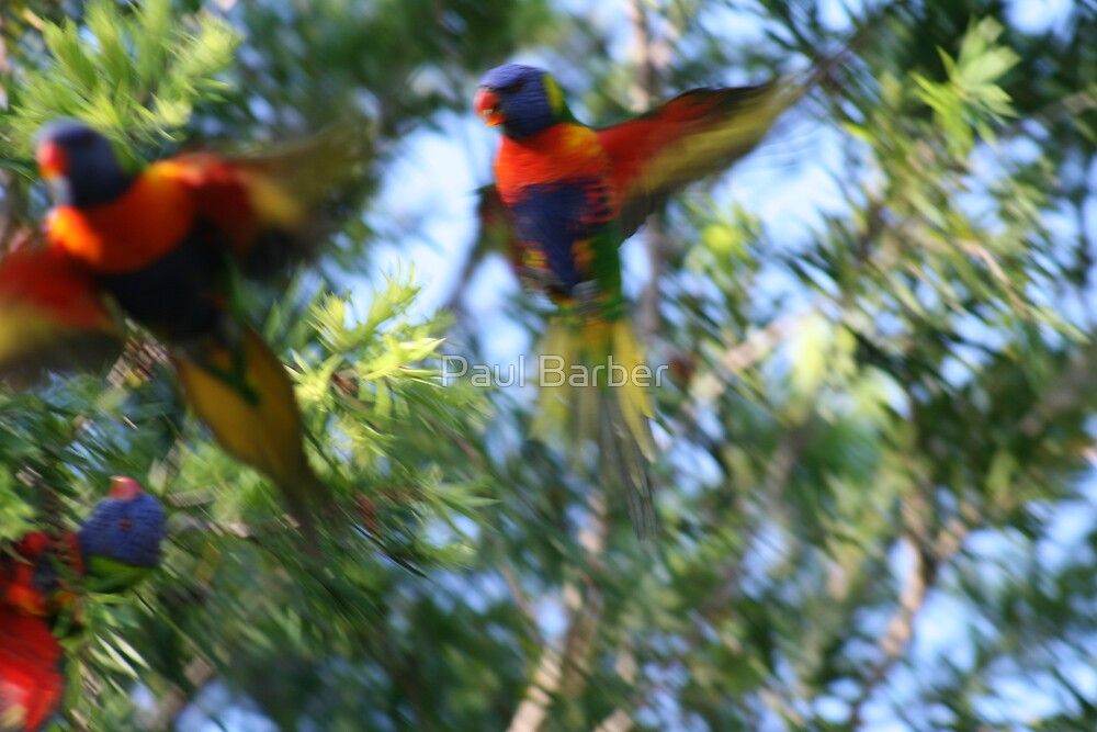 Bird Fight by Paul Barber