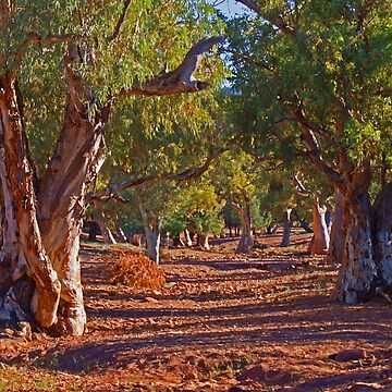 Red River Gums by MelvaVivian