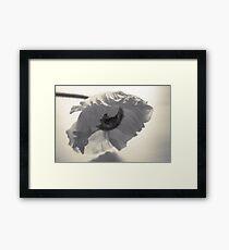 Crumpled Framed Print