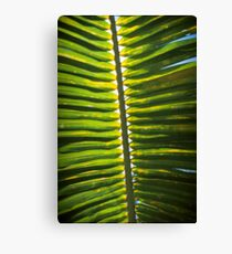 From beneath the Palm Frond. Canvas Print