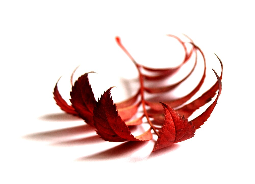 Autumn leaf 2 by simonday