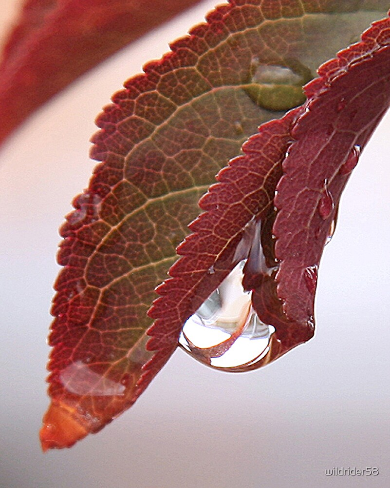 Leaf drop by wildrider58