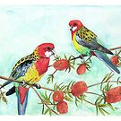 Eastern Rosella's on Bottlebrush Branch by Meaghan Roberts