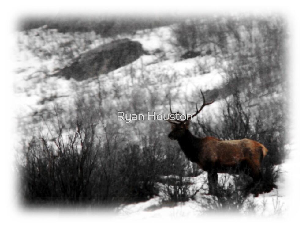 Bull  Elk by Ryan Houston
