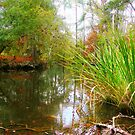 Bayou Cane Autumn by Michael Reimann