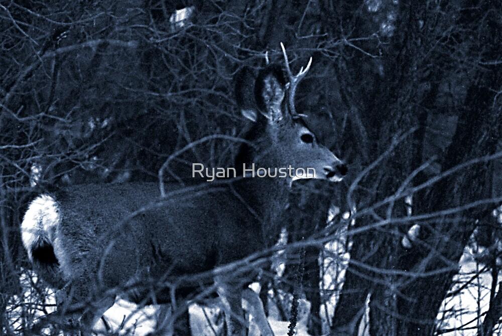 Fork 'n' Horn - Mule Deer Buck by Ryan Houston
