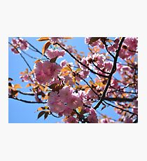 Pink Blossom Cluster Photographic Print