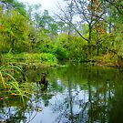 Bayou Cane Autumn 2 by Michael Reimann