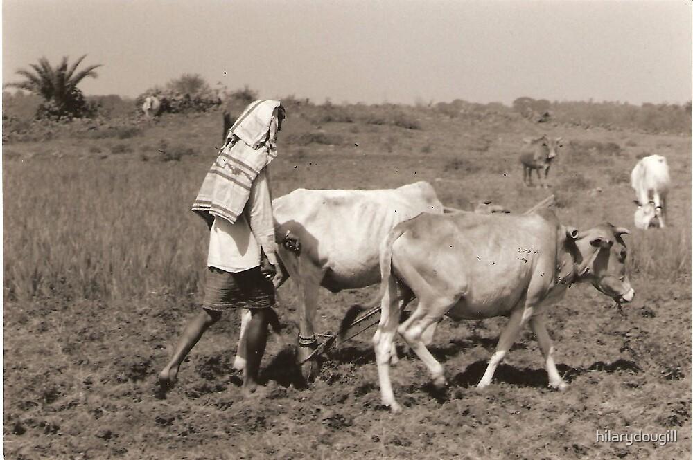 A Man ploughing in Bangladesh by hilarydougill