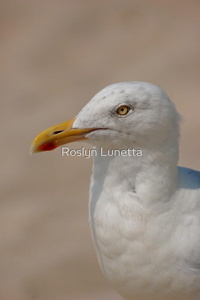 Herring Gull by Roslyn Lunetta