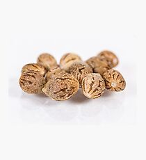 Cannabis Seeds in a Group - Locktite F1 Photographic Print