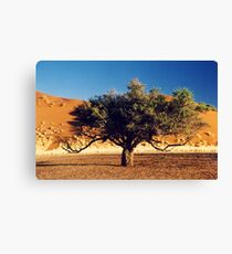 Desert Tree Canvas Print
