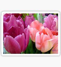 Tulip Time Sticker