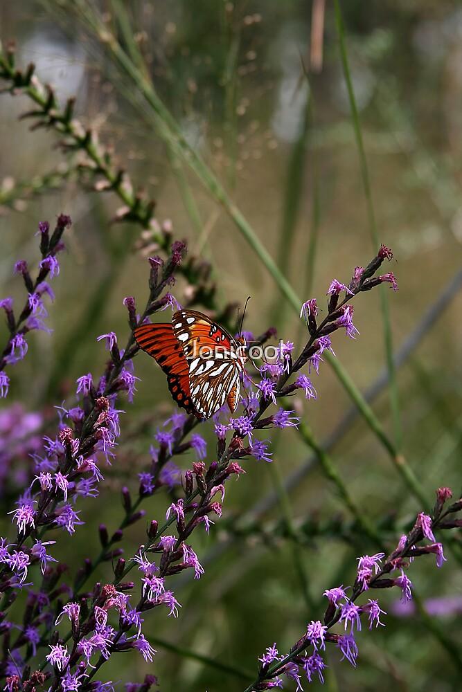 Wildflowers by Jonicool