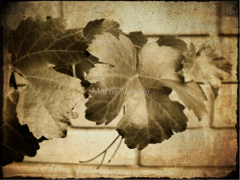 Vine Leaves by Martie Venter
