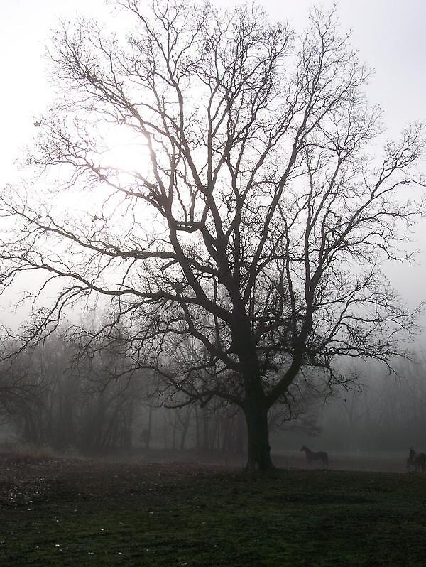 Foggy Day by Amy Corkin
