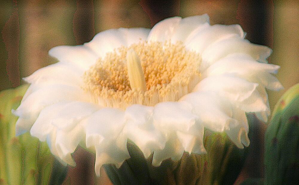 SOFT FLOWER by mark anthony