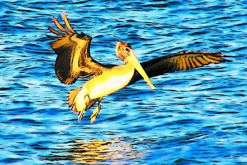 WATER LANDING by mark anthony