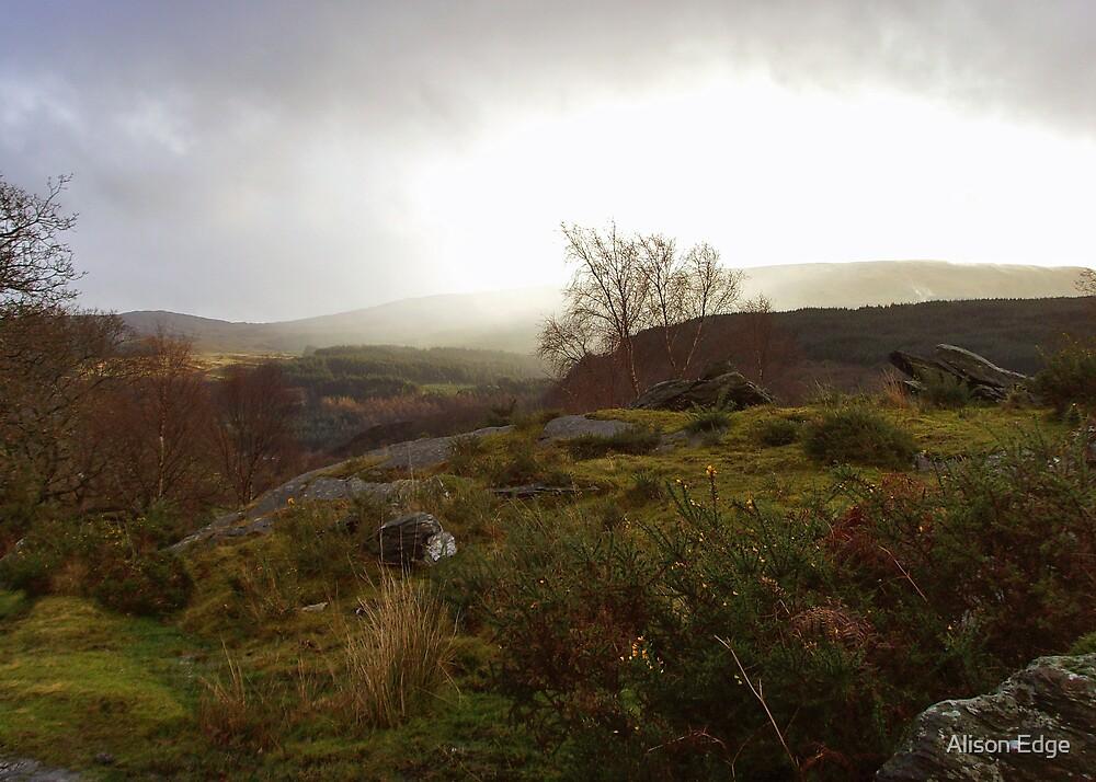 Distant Rain by Alison Edge