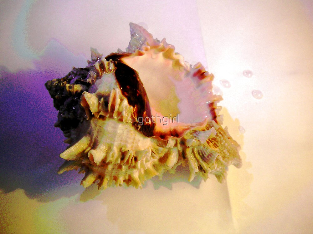 Sea Shell by gothgirl