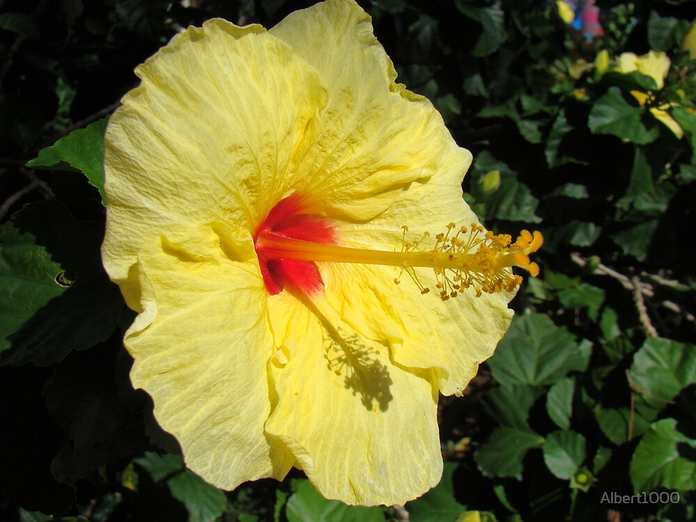 Flower detail #3 by Albert1000