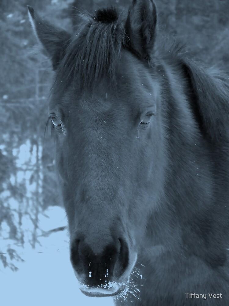 Moonlit Horse by Tiffany Vest