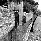 Fence by Catherine Davis