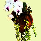 White Orchids growing in a coconut shell by DAdeSimone