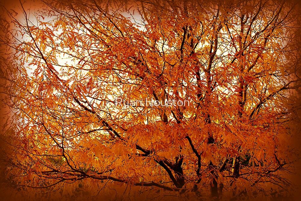 Golden Leaves by Ryan Houston