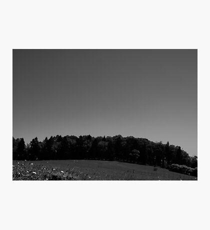 Treeline Photographic Print