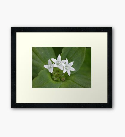 What is the name of this plant? Framed Print