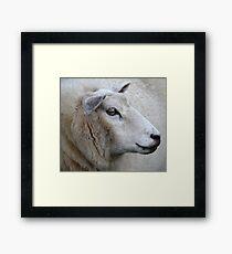 Pretty Ewe Framed Print