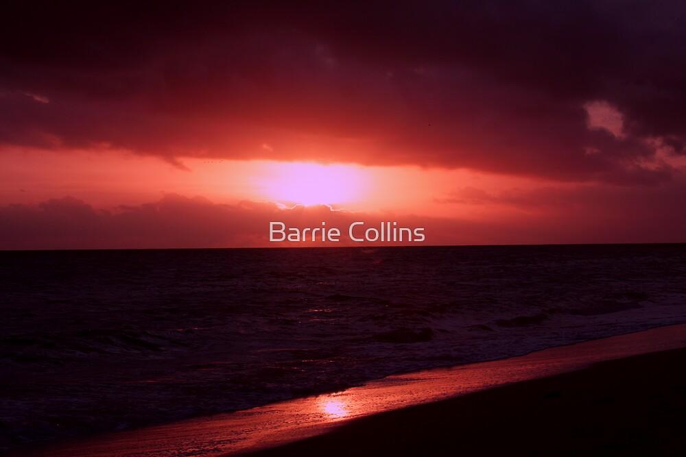 Shepherd's Warning by Barrie Collins